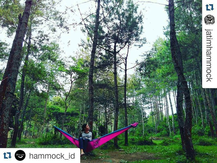 "#Repost @hammock_id with @repostapp  #Repost @jatimhammock with @repostapp  In Frame : @clarside Location : Bumi Perkemahan Bedengan Dau  #JatimHammock .  . . . . . #hammockersindonesia  #hammockid #hammock  #hammocktown #hammocklife #hanging  #keephanging  #salamgantung  #hammockindonesia #seeyouatthenexttrees  #alwayshanging #hammockcamping #hammockliving Jangan lupa follow juga  Official Twitter ""@HammockersID"" FB Group ""Hammockers Indonesia"" by @hammockers_cantik"