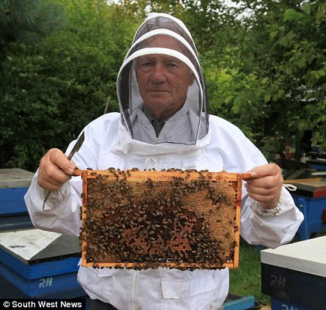 British beekeeper breeds 'super-bee' that can protect itself from deadly mite that is wiping out colonies