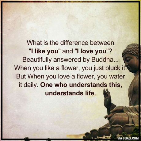 When you like a flower, you just pluck it... But when you love a flower, you water it daily - Buddha
