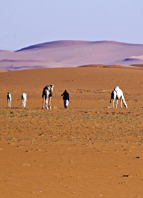 East of Riyadh is a desert famous for its red sand, Ar Riyad_ East Saudi Arabia