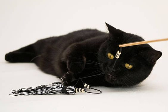 How To Keep Your Cat Safe From Cords Wires And Cables In 2020 Cat Toys Pet Gift Cat Lover Gifts