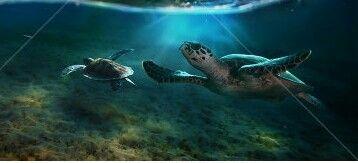 Turtle. Морские черепахи