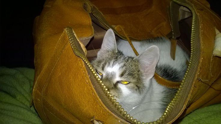 Każda torba jest doskonalą kryjówką.