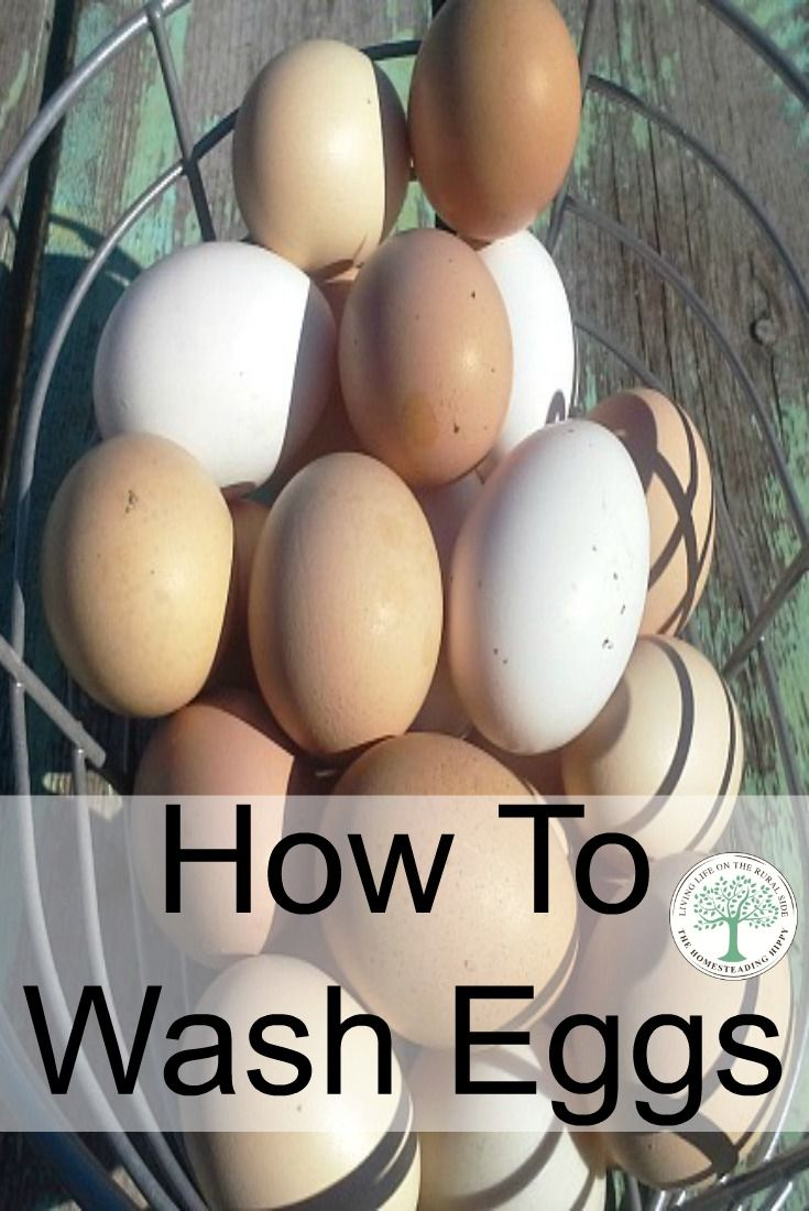 What is the best way of washing chicken eggs? How do you safely clean them? Or does it really matter? The Homesteading Hippy via @homesteadhippy