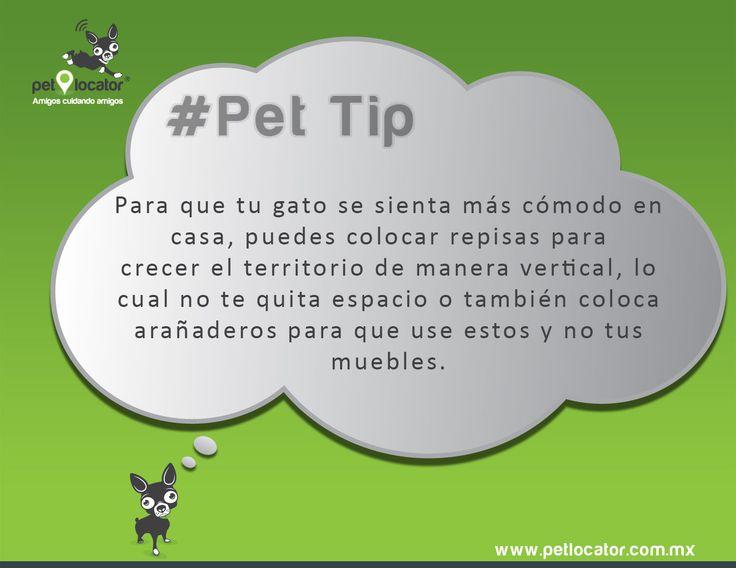 #Tip Haz de tu casa un ambiente gato-amigable