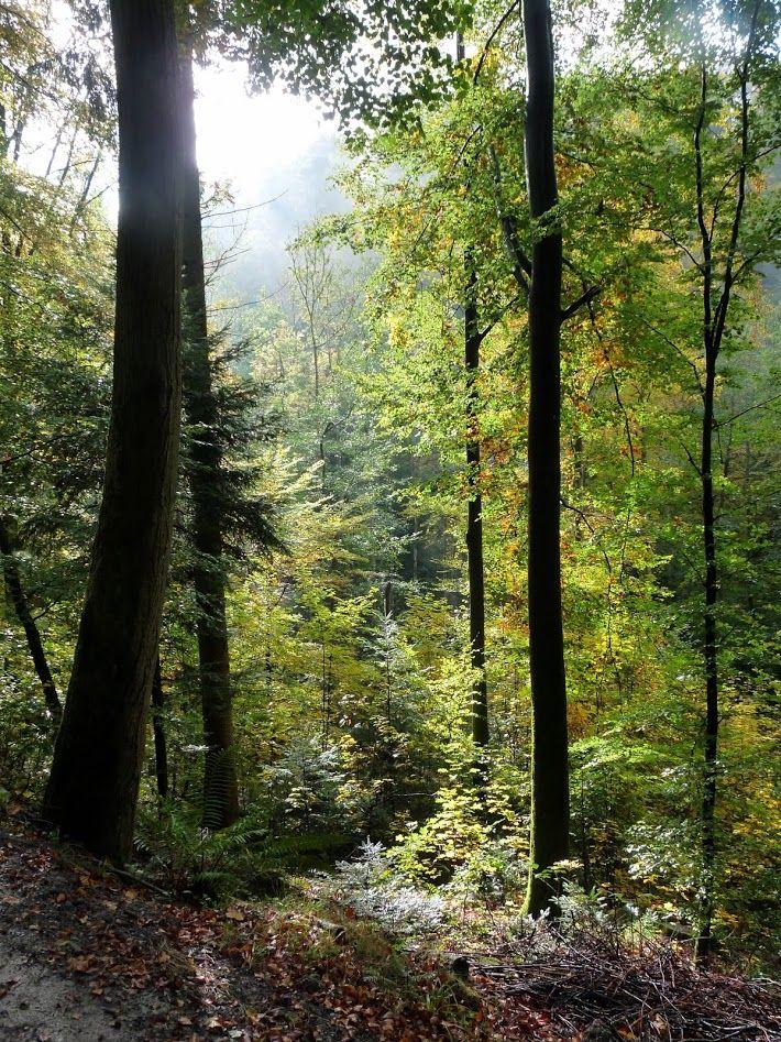 Forest Bad Herrenalb