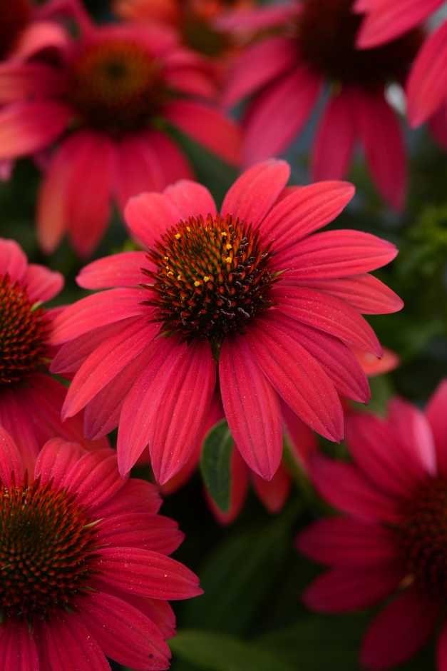 521 besten flora bilder auf pinterest sch ne blumen pflanzen und blumengarten. Black Bedroom Furniture Sets. Home Design Ideas