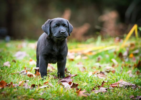 Wondering what to name your cute baby girl or boy dog? You're in luck. We've gathered the most popular puppy names of 2014. Did your favorite make the list?