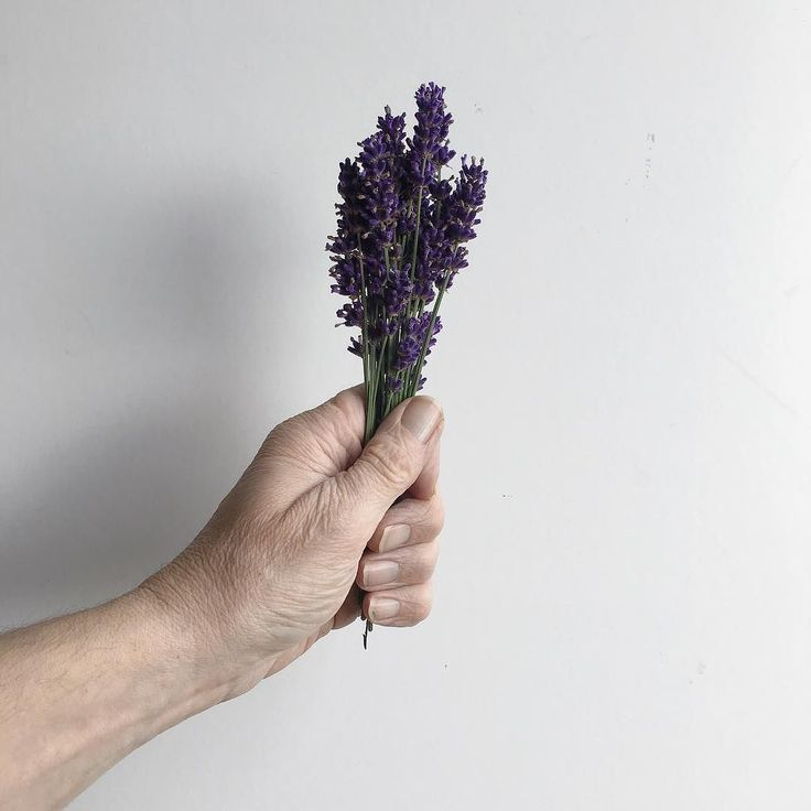 Simple pleasures the healing power of lavender I use it to induce sleep it's a great alternative treatment for insomnia but that's not the only healing benefit what do you use it for ?