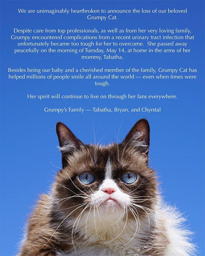 Grumpy Cat Dies Aged 7 Grumpy cat, Funny cat memes, Cat