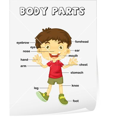 Human Body Parts Diagram For Kids