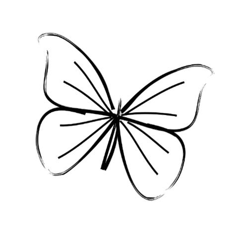 Simple Butterfly Line Drawing