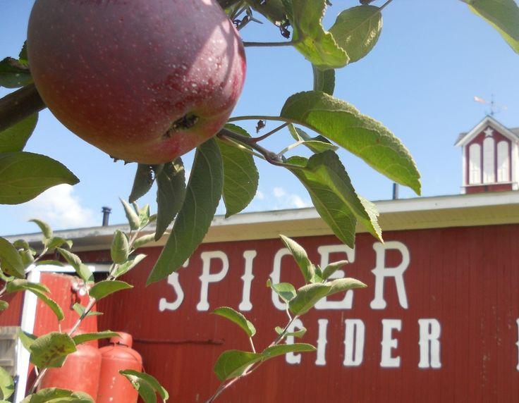 spicers cider