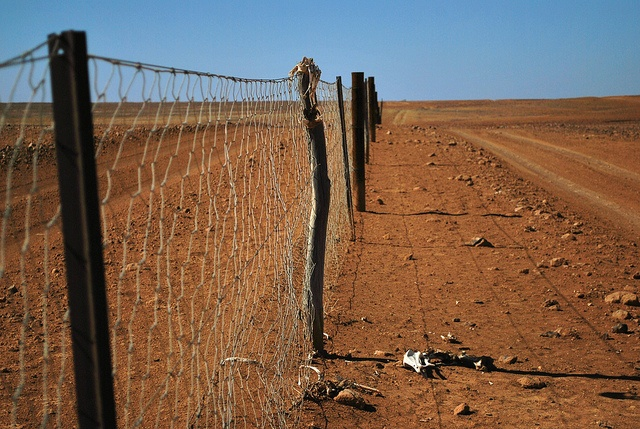 The dog fence is the longest fence in the world. It is to prevent dingos and feral dogs from entering the sheep country of eastern Australia