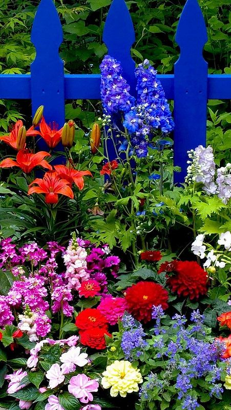 Flowers_fence_different_bright_