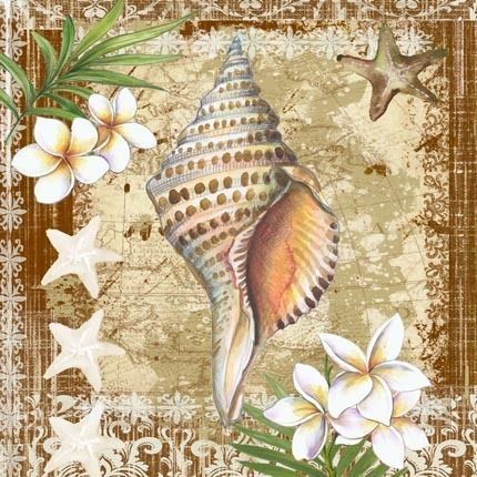 Conch Shell on Brown by Elena Vladykina | Ruth Levison Design