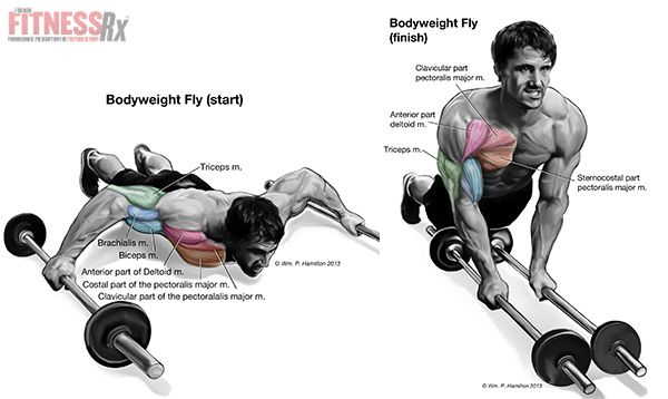 bodyweight flyes exercise press up