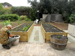 Vital Veggies - We make and maintain successful home food gardens so you can enjoy freshly picked, delicious, nutrient-dense fruit and veggies!