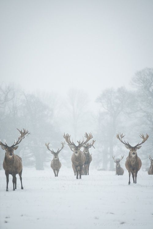 Winter wonderland. Christmas in Scotland? Click  here: http://adventuretravels.hubpages.com/hub/Great-Ideas-for-Amazing-Winter-Holidays