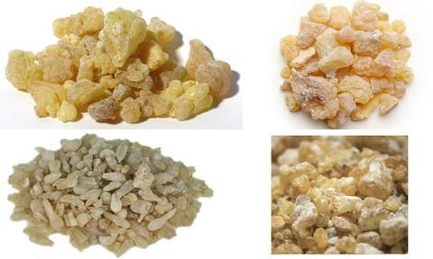 "Frankincense, a precious resin obtained from several different trees of the Boswellia genus, sometimes goes by the name olibanum from Arabic al-luban meaning ""t"