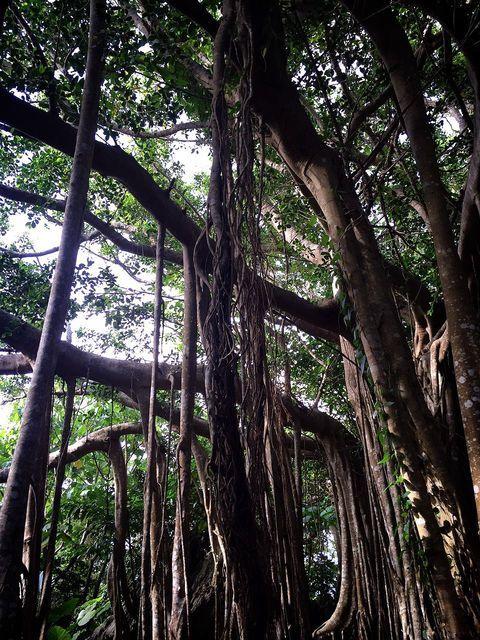 沖縄観光におすすめ!専門家が教える沖縄本島スポット20選 | Travel.jp[たびねす]