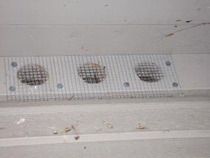 Easy Fix To Stop Rodents And Birds From Entering Your Attic Rodents Attic Bird Seed