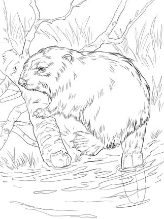 Click to see printable version of Eurasian Beaver on a River Bank coloring page