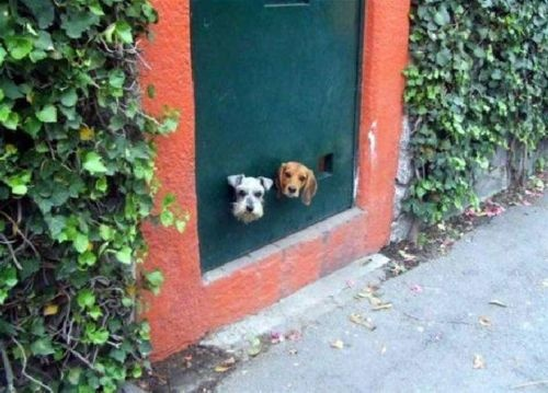 Remember...when making a doggie door, measure twice and cut once!