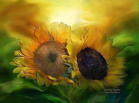 """""""Me gustan los girasoles porque siempre giran en la dirección del sol, porque son fieles a su propósito que es encontrar la luz, porque al nacer ya saben que su misión es conectarse con el Yo…"""