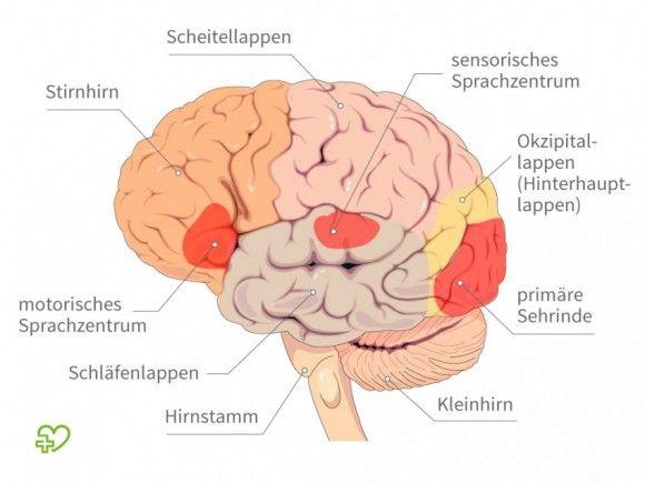Gehirn: Aufbau und Funktion - Onmeda.de