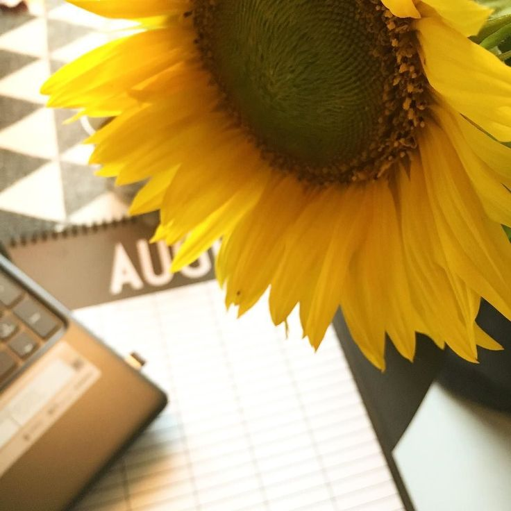 Aurinkoa aamuunne! Päivä on pilvinen mutta pöytää valaisevat yön aikana auenneet auringonkukat. Seuraavaksi katse kohti SPSS-taulukkoja #flowers #instaflowers #kukka #auringonkukka #sunflower