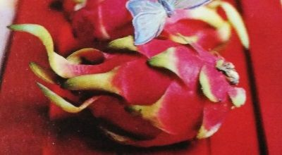 Easy food recipe: Dragon Fruit Yogurt Smoothie -- Beautiful recipe. #vegetarianfood