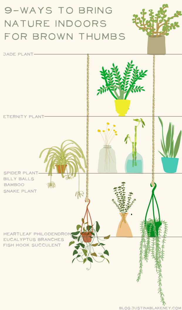 Bring nature indoors even if you have a brown thumb.