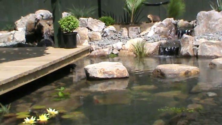 Turtle, Fish Pond