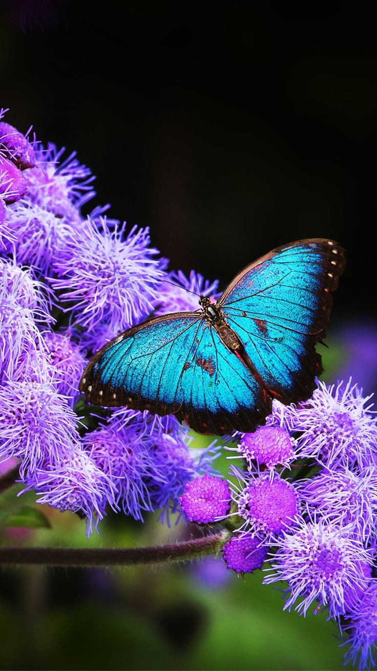 Pin by dreamgirl🌸 on wallpaper   Blue butterfly, Dragonfly ...