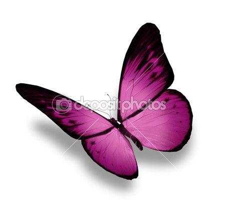 mariposa violeta, aislado en blanco — Imagen de stock #11580586