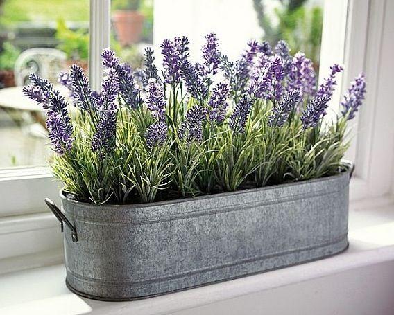 Lavender inside