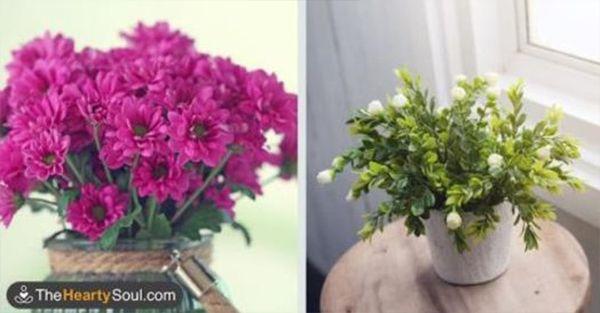 10 Φυτά που προσελκύουν «Θετική Ενέργεια» και ΑΜΕΣΩΣ θα σας κάνουν πιο…