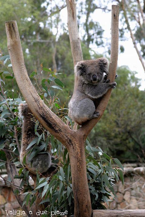 Cleland Wildlife Park - Adelaide, South Australia