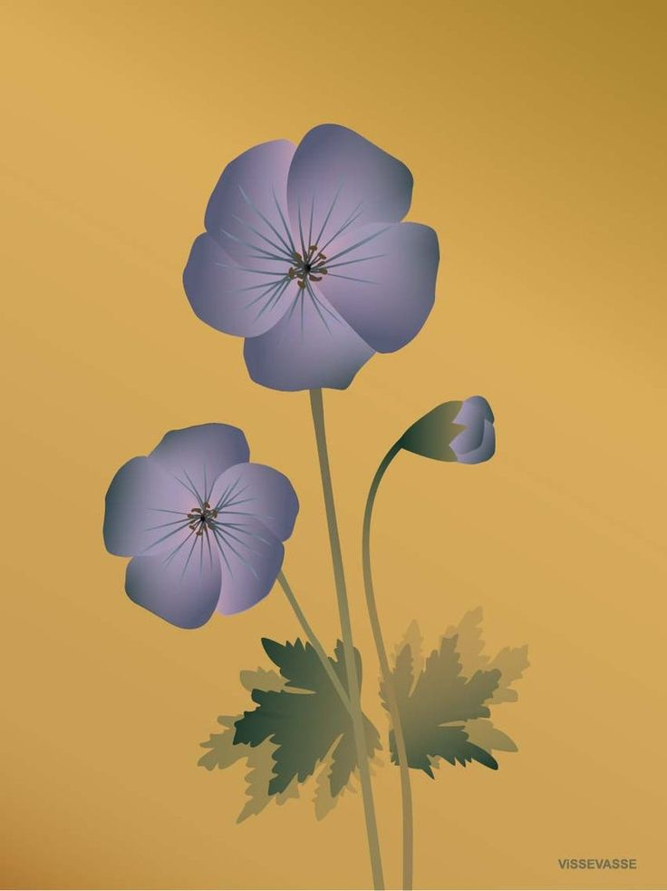ViSSEVASSE GERANIUM amber poster
