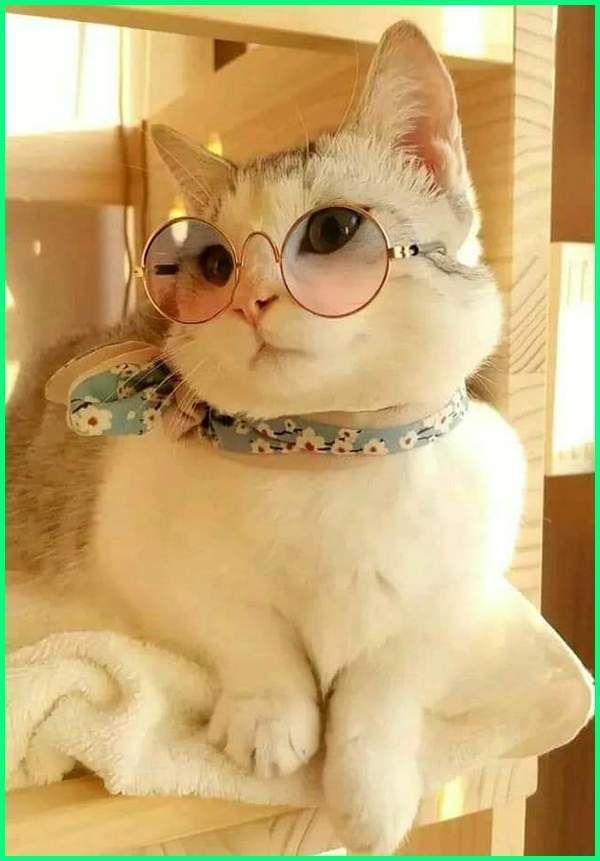 Kucing Lucu Korea