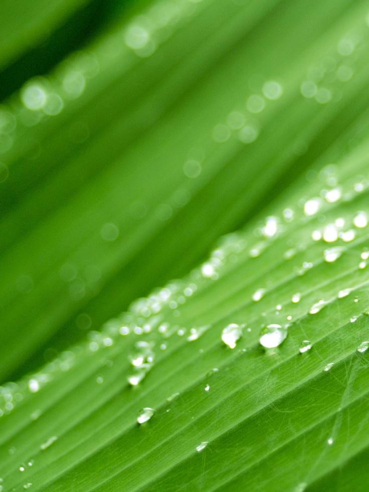 Raindrops on a Banana Leaf