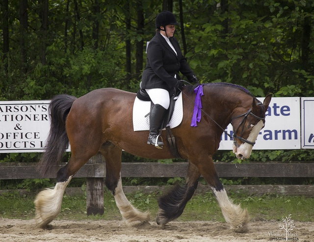 Clydesdale Love.theres nothing like riding a large breed horse.these two look great together