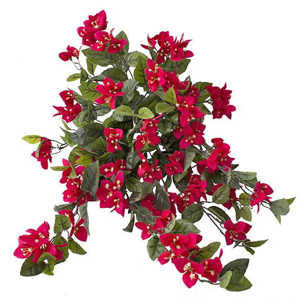 Les 72 meilleures images du tableau plantes et arbustes for Belle plante exterieur
