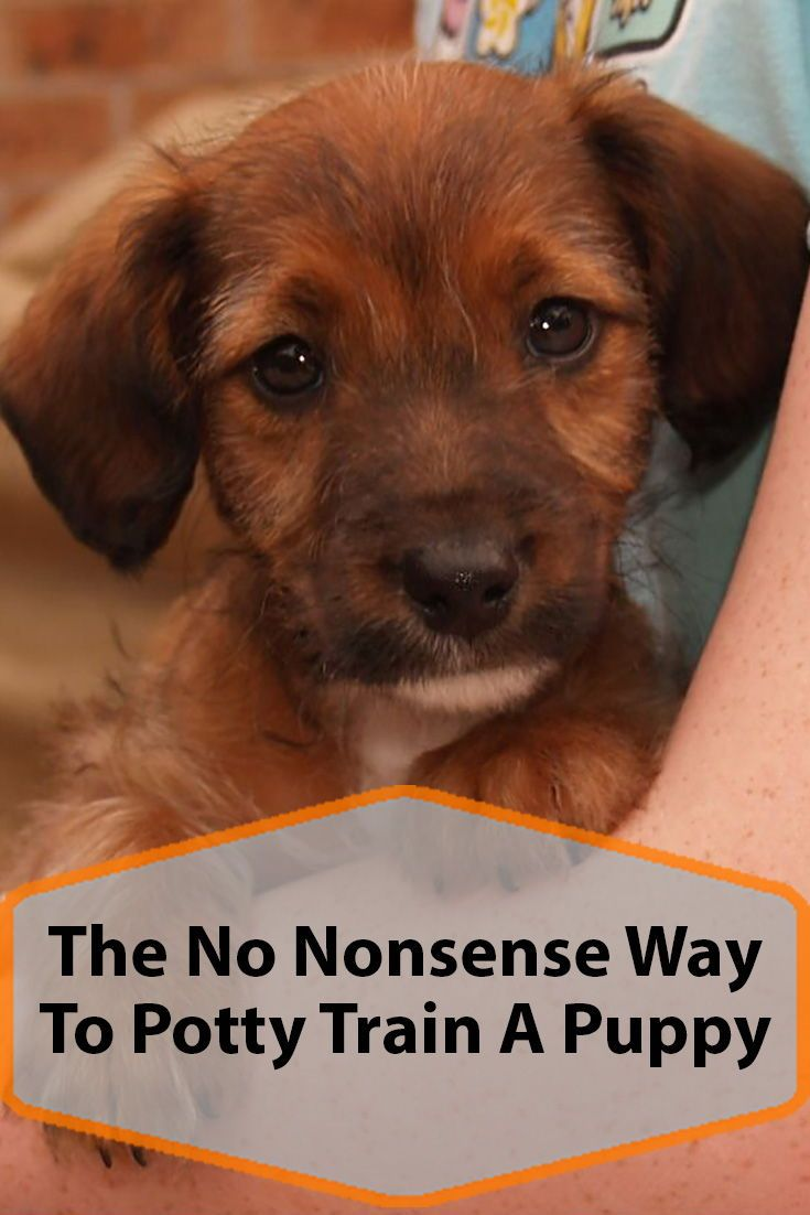 The No Nonsense Way To Potty Train A Puppy Puppy Training