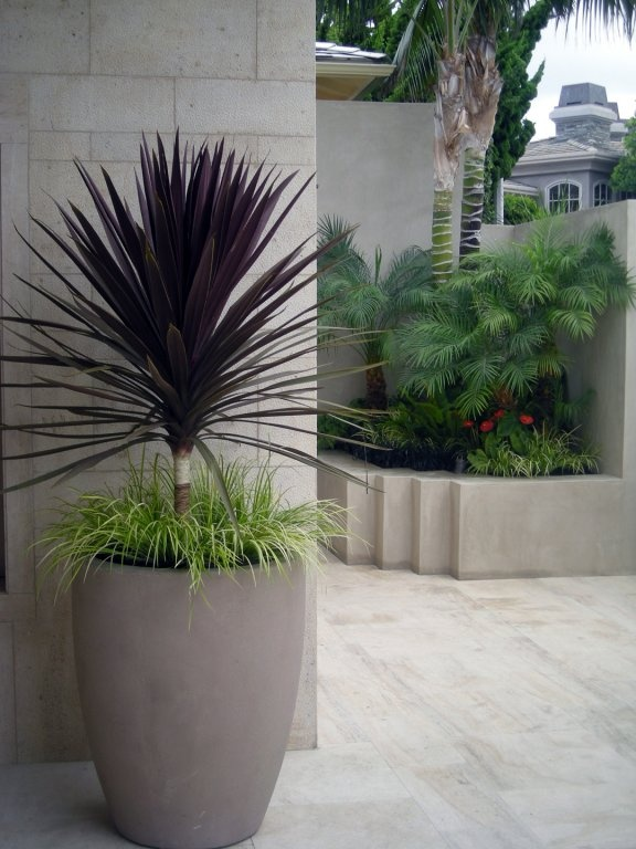 Tall pot with dracena and nicely underplanted jardin for Tall ornamental grasses for pots