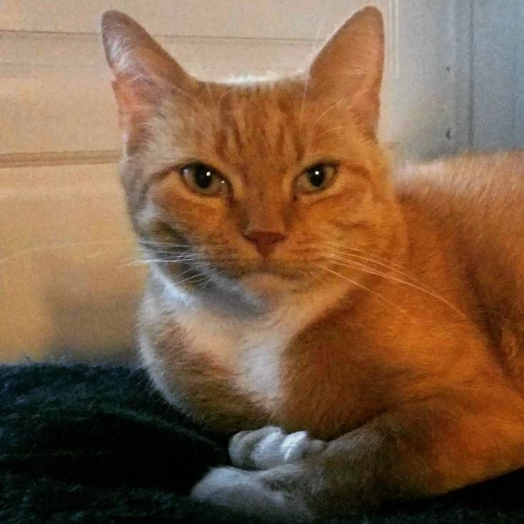 The ginger #cat on a green blanket