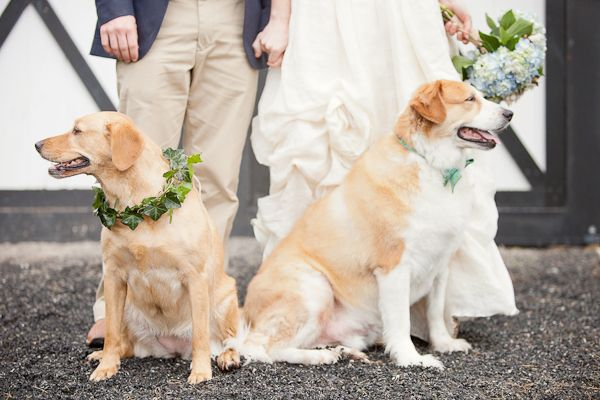 dogs in weddings: Rings Dogs, Flowers Dogs, Photo Ideas, Puppies Flowers, Flowers Girls, Bridesmaid Ideas, Dogs Wedding, Dogs In Wedding, Dogs Portraits