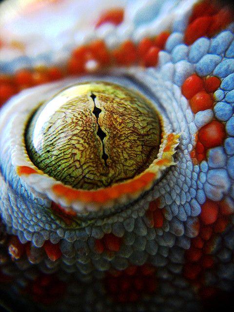 Chameleon Eye by redzazel, via Flickr
