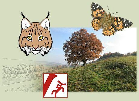 natur, naturfotos, naturbilder, makrofotos, pflanzen, pflanzen-fotos, pflanzen-portäts, naturschutz, landschaft, ahrtal, einheimische arten